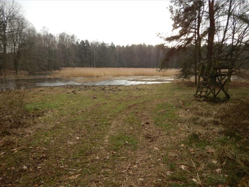 Grenzgrabental WB-Kro-03 im Friedenthaler Grund – Magere Flachlandmähwiese