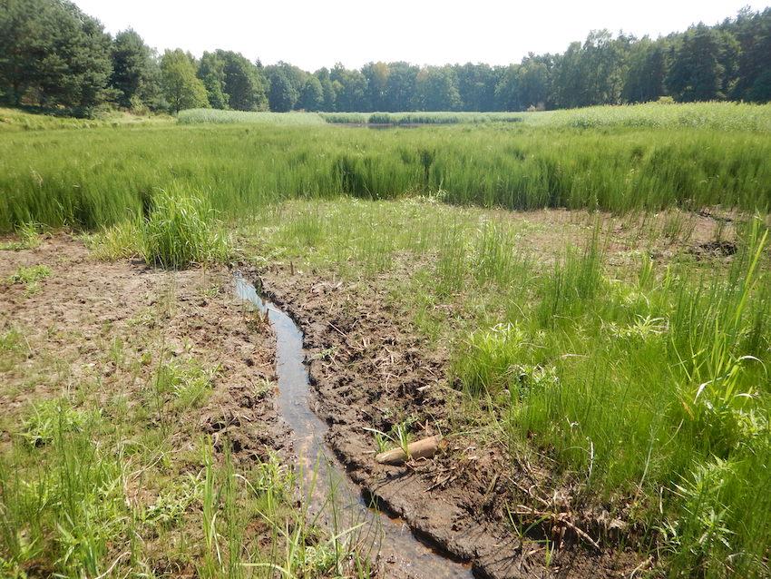 Vorher: trockener Teich im Friedenthaler Grund
