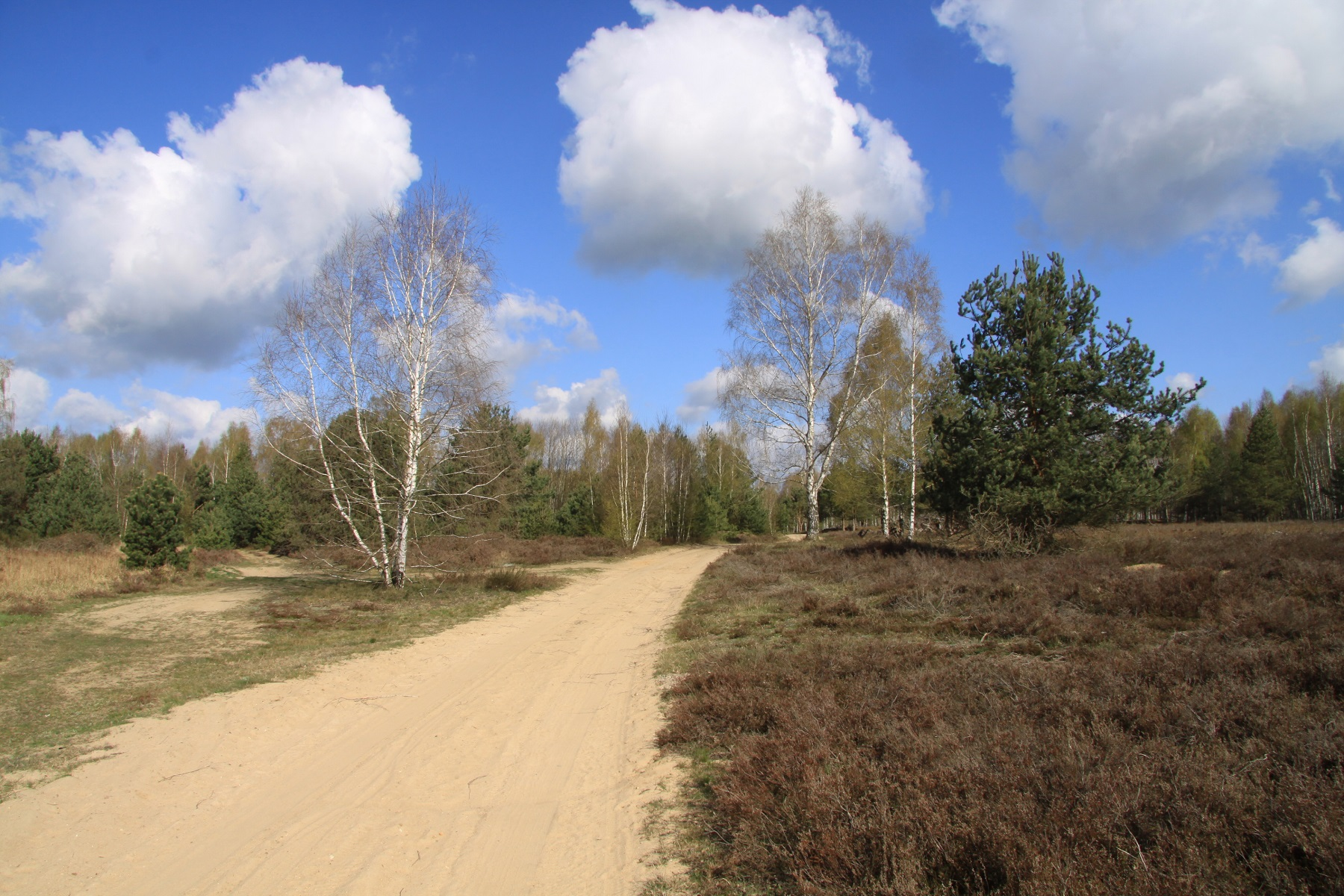 Woltersdorfer Heide Foto Martin Schulze RANA 1800 x1200 Pixel